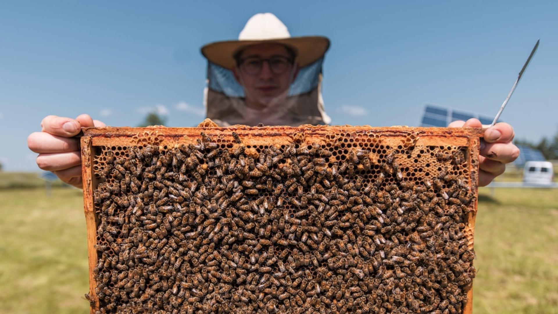 Kas nutiktų, jei bičių nebeliktų? Ar tikrai išnyktų žmonija? (VIDEO su gestų kalba)